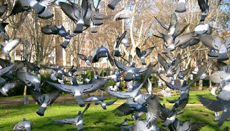 barcelona-palomas